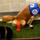 Detroit Airport Installs Doggie Restroom