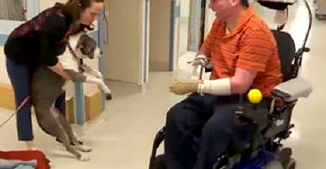 4.23.14 - Paralyzed Pit Bull Brings Hope to Patients1
