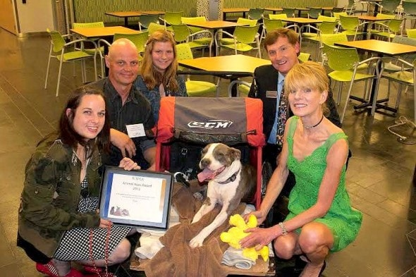 4.23.14 - Paralyzed Pit Bull Brings Hope to Patients4