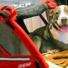 Paralyzed Pit Bull Brings Hope to Patients
