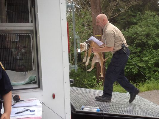 Tennessee Police Raid Dog Fighting Ring
