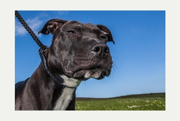 Dog Saved from Death Row Wins National Award
