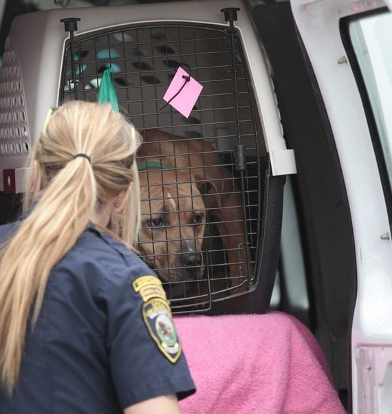 Buffalo Police and ASPCA Rescue Dogs and Make Arrests in Dog Fighting Ring