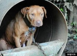 Alabama Dog Fighting Bust Gets Three More Guilty Pleas