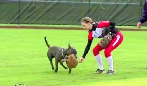 Glove-Swiping Dog Delays Softball Game