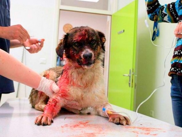 4.30.14 - Dog REscued from River After Surviving Hitman