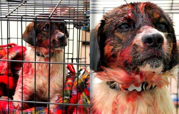 4.30.14 - Dog Rescued from River After Surviving Hitman4