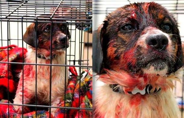 Miracle Dog Rescued from River After Surviving Hitman's Blast