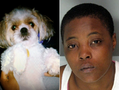 Woman Pleads Guilty to Throwing Dog into Traffic
