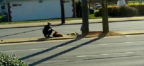 Officer Saves Brokenhearted Dog on Busy Road