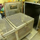 Help Stop Gas Chamber Euthanasia in the US