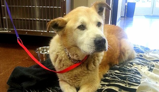Senior Dog Walks Three Miles to Find Owner Missing in Landslide