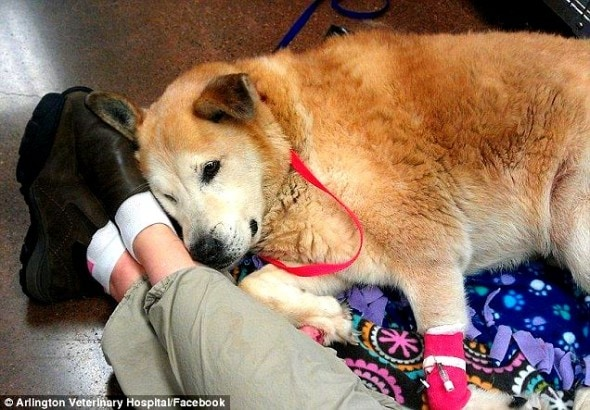 4.6.14 - Dog Travels to Find Owner Missing in Landslide3