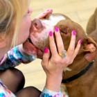 Incredibly Ill Pit Bull Gets Rescued & Completely Transforms
