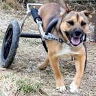 Iraq War Vet Donates New Set of Wheels to Dog