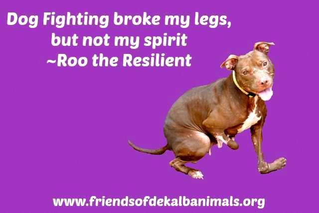 help stop dog fighting To stop dogs from fighting picking up on a dog's aggressive behaviors will help you to recognize, and stop figuring out how to a stop dog from eating poop.