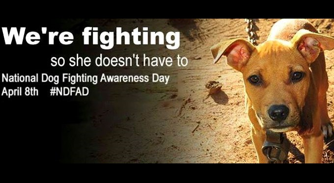 Why Today Is National Dog Fighting Awareness Day