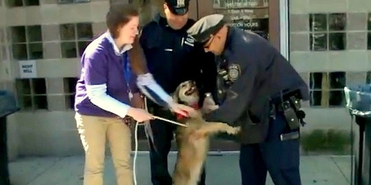 Stray Dog Races Busy NYC Train & Gets Rescued