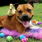 Boom's Easter Photo Shoot