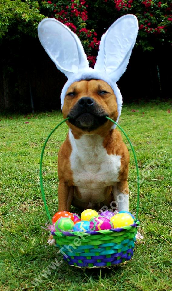 Boom S Easter Photo Shoot Life With Dogs