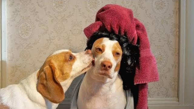 Kissing Dad: Cute Dogs Maymo & Penny