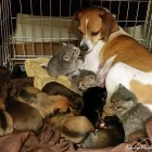 Mama dog fosters three abandoned kittens along with her puppies
