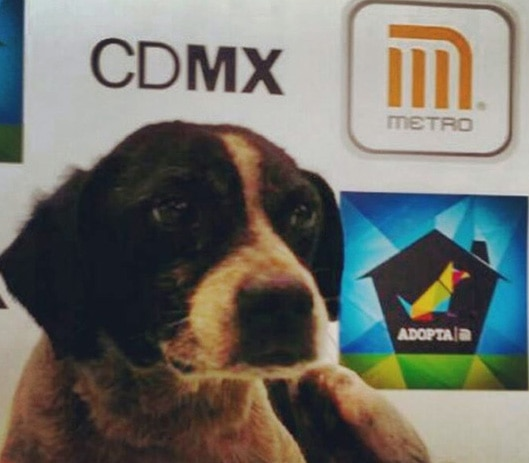 Mexican Stray Dog Stranded in Metro Lines Gets Rescued