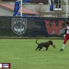 Dog Stops Softball College Game When it Steals Players' Gloves
