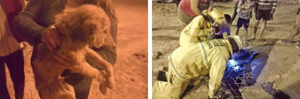 Thanks to local children, three adult dogs were rescued from an abandoned well.