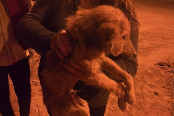 Children Help Rescue Three Dogs Abandoned in Dry Water Well