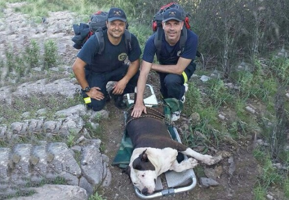 Marbella firefighters Jesús Gasset and Alfonso Vidorreta save the life of a dog suffering a heatstroke.