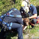 Hero Firefighters Rescue Labrador from Washington Cliff