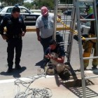 Dog Thrown Down Sewer Gets Rescued