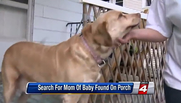 Labrador Leads Owner to Abandoned Newborn Baby Boy