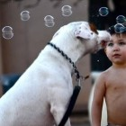 Babies Laughing at Dogs Eating Bubbles Compilation