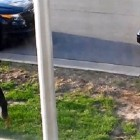 Indiana Police Officer Caught Abusing K-9