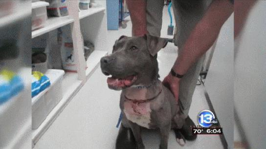 Abandoned, Wounded Dog Found, Police Investigate