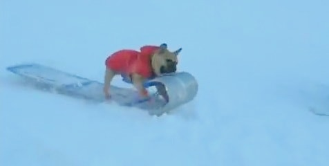Dog Hijacks Kid's Sled
