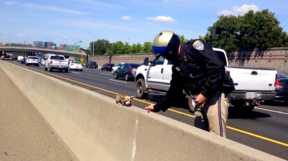 """This little dog needed some help off I-680 freeway today. We're glad he's safe."""