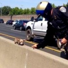 Hero Motorcycle Cop Rescues Tiny Dog from Highway