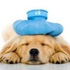 Dog Flu Cases Reported in Essex County, Mass.