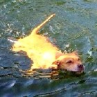 Lucky Dog Survives Crocodile Attack
