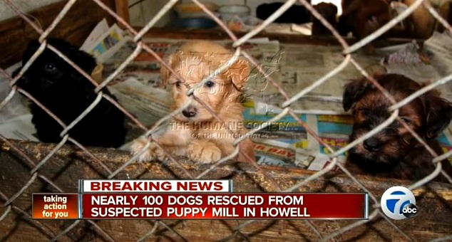100 Dogs Rescued from Squalid Puppy Mill