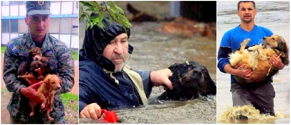 Heroic Bosnians Brave Dangerous Floodwaters to Save Dogs