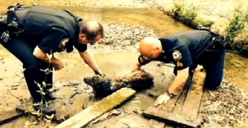 Heroic Officers Save Senior Dog Struggling in Mud for 60 Hours