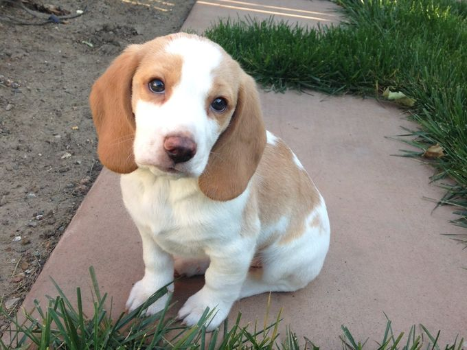 Beagle Stolen from Car Returned to Family