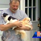 Over 50 Dogs Saved from Kennel Fire