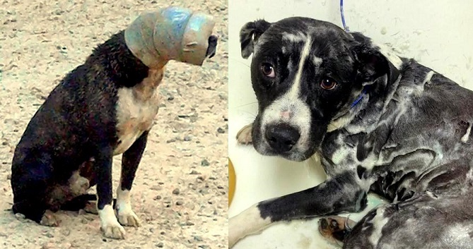 Dog Freed After Week with His Head Stuck in a Pipe