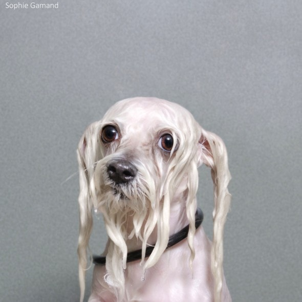 5.20.14 - Dogs Who Really Hate Bathtime10