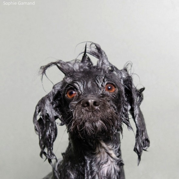 5.20.14 - Dogs Who Really Hate Bathtime3